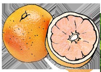ff_grapefruit