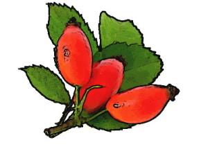 rose-hips-picsay